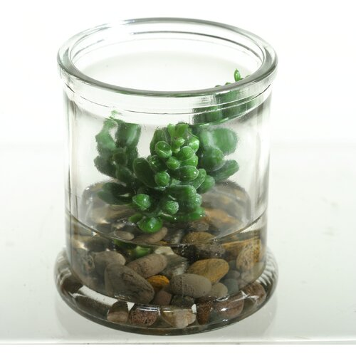D & W Silks Small Donkey Tail Succulent Floor Plant in Jar