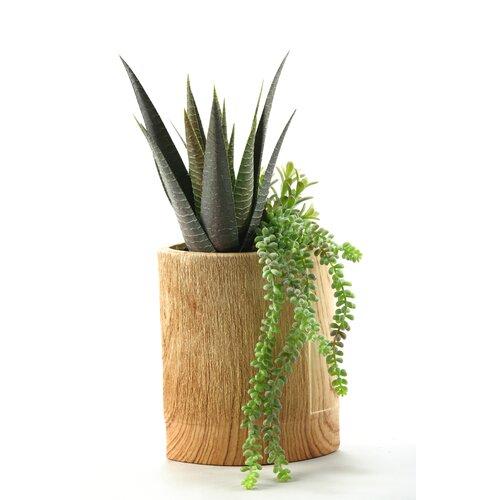 D & W Silks Aloe Plant and Hanging Sedum Floor Plant in Pot