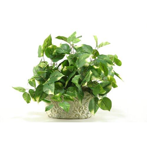 D & W Silks Pothos Desk Top Plant in Pot & Reviews