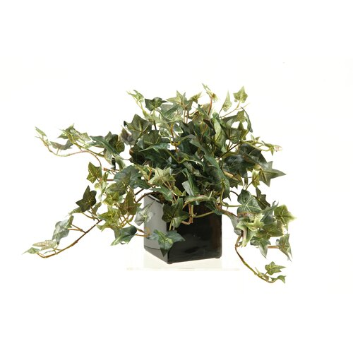 D & W Silks Jamaican Ivy Desk Top Plant in Planter