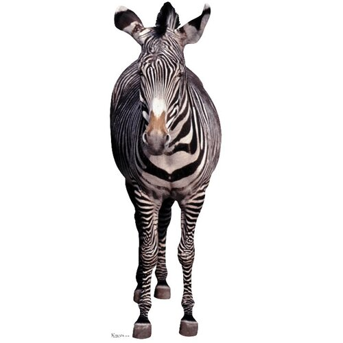 Advanced Graphics Animals Zebra Cardboard Stand-Up