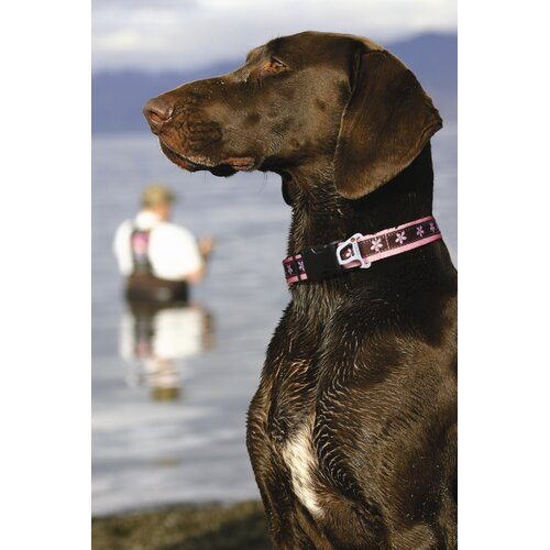 Kurgo Flower Wander Dog Collar