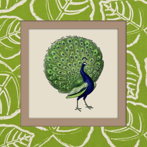 Peacock Graphic Art on Canvas