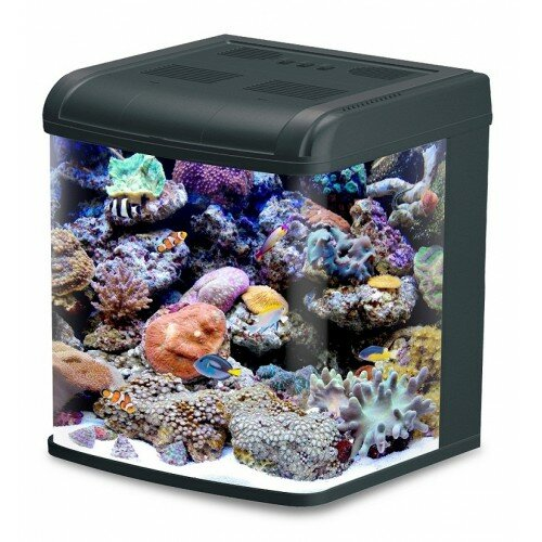 Aqua Euro USA 24 Gallon All-in-One Aquarium Tank