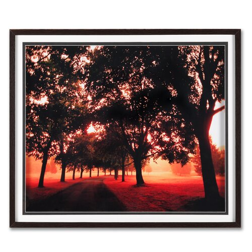 Graham & Brown Portfolio Morning Walk Framed Photographic Print