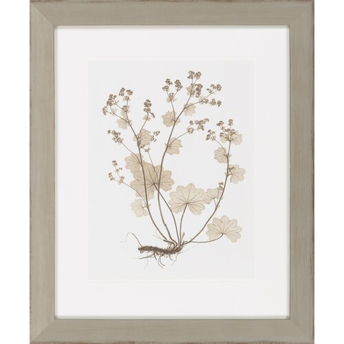 Sepia Nature Study I by Vision Studio Framed Graphic Art