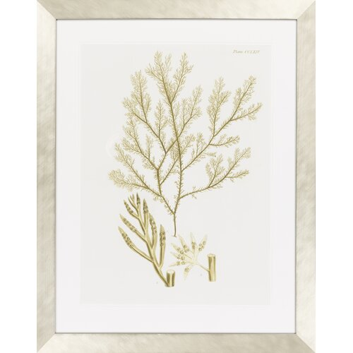 Dramatic Seaweed I by Vision Studio Framed Graphic Art