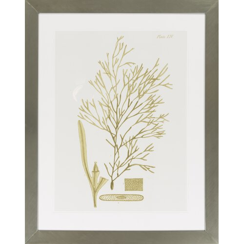 Dramatic Seaweed II by Vision Studio Framed Graphic Art