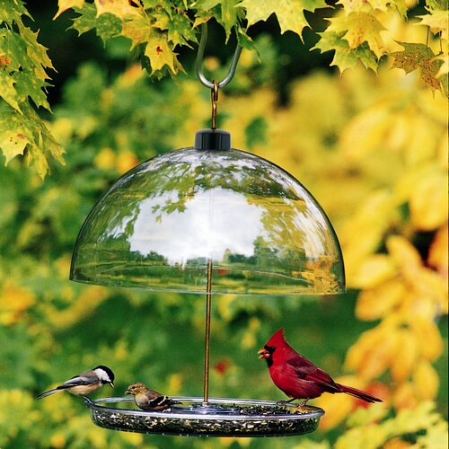 Droll Yankees Dorothy's Cardinal Platform/Tray Bird Feeder