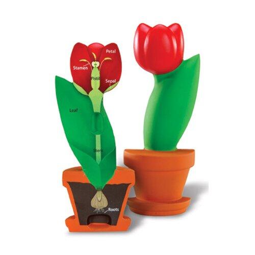 Cross-section Flower Model