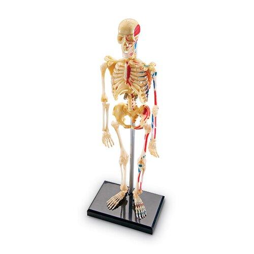 Learning Resources Model Skeleton