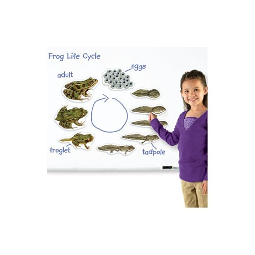 Learning Resources Giant Magnetic Frog Life Cycle 9 Piece Set
