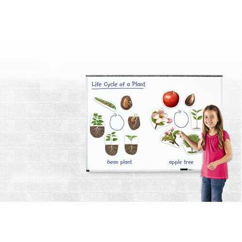 Learning Resources Giant Magnetic Plant Life Cycle