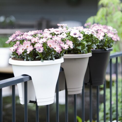 Exaco Corsica Flower Bridge Planter (Pack of 2)