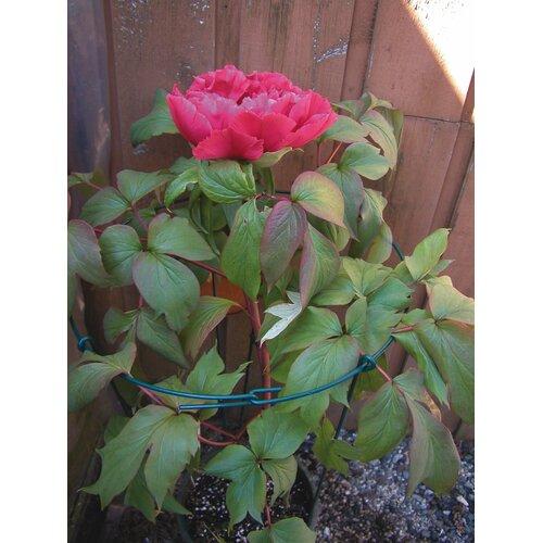 Lusterleaf Single Flower Supports