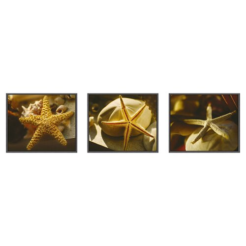 Pro Tour Memorabilia Starfish 3 Piece Framed Photographic Print Set