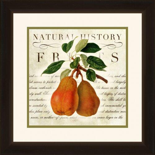 Pro Tour Memorabilia Natural History Fruits 2 Piece Framed Graphic Art