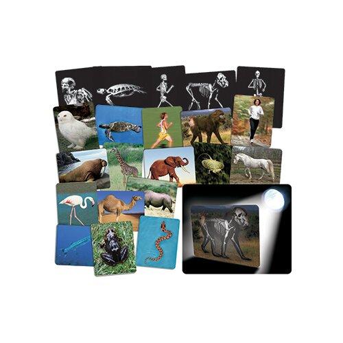Roylco Inc Whats Inside Animals
