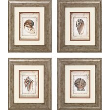 Shell PrintArt 4 Piece Framed Painting Print Set