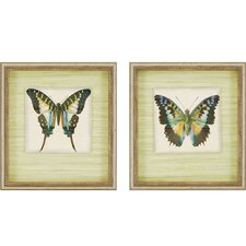 Butterfly II by Goldberger 2 Piece Framed Graphic Art Shadow Box Set
