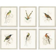 "<strong>Paragon</strong> Hummingbirds by Jardine Traditional Art - 11"" x 13"" (Set of 6)"