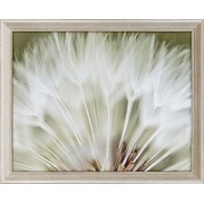 Dandelion III by Miller Candice Olson Framed Photographic Print