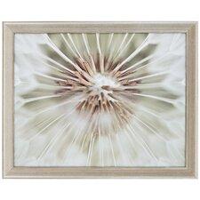 Dandelion II by Miller Framed Photographic Print