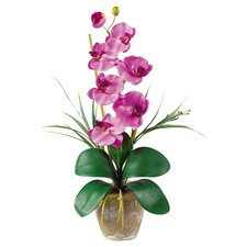 Phalaenopsis Silk Orchid Arrangement in Mauve