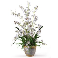 Dancing Lady Orchid Arrangement in White