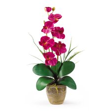 <strong>Nearly Natural</strong> Phalaenopsis Silk Orchid Arrangement in Beauty Pink