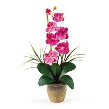 <strong>Nearly Natural</strong> Phalaenopsis Silk Orchid Arrangement in Dark Pink