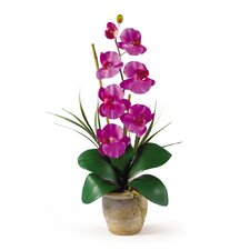 <strong>Nearly Natural</strong> Phalaenopsis Silk Orchid Arrangement in Orchid