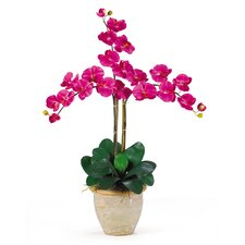 Triple Phalaenopsis Silk Orchid Arrangement in Beauty Pink