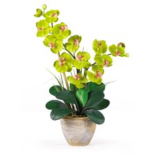 Double Phalaenopsis Silk Orchid Arrangement in Green
