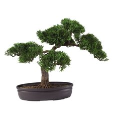 Silk Cedar Bonsai Desk Top Plant in Planter