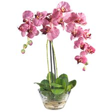 Phalaenopsis Silk Orchid Arrangement in Purple with Glass Vase