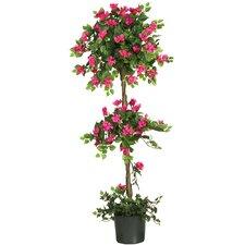 Mini Bougainvillea Round Topiary in Planter