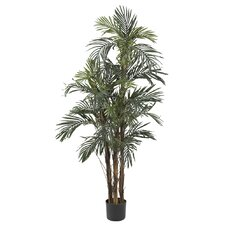 Robellini Palm Tree in Pot