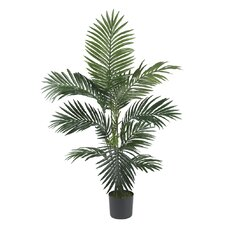 Silk Kentia Palm Tree in Green