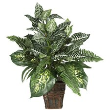 Silk Mixed Greens Zebra Plant with Wicker in Green