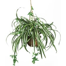 Silk Spider Hanging Plant in Basket