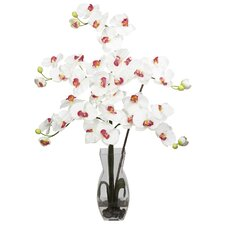 Phalaenopsis with Vase Silk Flower Arrangement in White