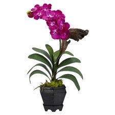 Vanda with Black Hexagon Vase Silk Arrangement in Beauty