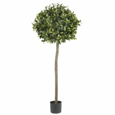 Sweet Bay Ball Round Topiary in Pot
