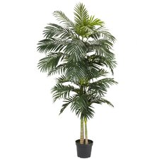 Cane Palm Tree in Pot