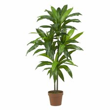 Dracaena Silk Floor Plant in Pot