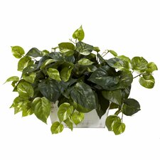Pothos Desk Top Plant in Planter