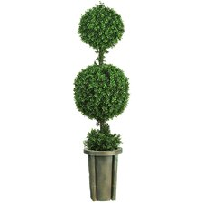 Double Ball Leucodendron Topiary in Decorative Vase