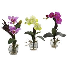 Mixed Orchid with Cube Arrangements (Set of 3)