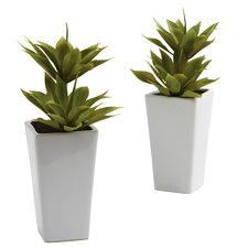 Double Mini Agave with Planter (Set of 2)